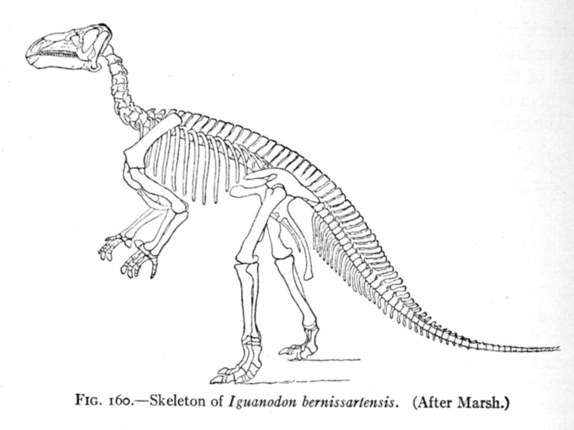dinosaur skeletal reconstruction prehistoric animal bones