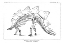 http://www.copyrightexpired.com/earlyimage/bones/preview_marsh_stegosaurus.jpg