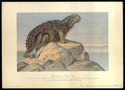 Hylaeosaurus