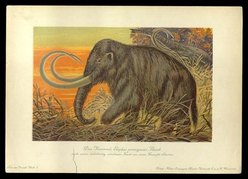 Woolly_Mammoth 1