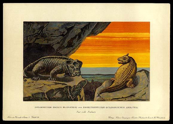 Geikia and Sclerosaurus