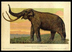Woolly_Mammoth 2