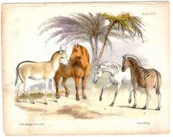 benjamin waterhouse hawkins horses